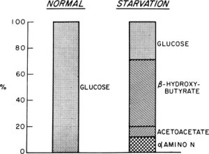 Fuente: Ketone bodies as a fuel for the brain during starvation.